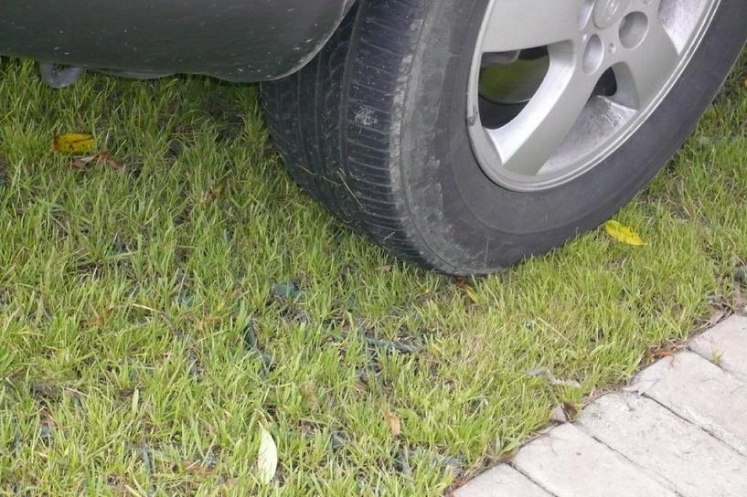 В Омске за парковку на газоне оштрафовали более 500 водителей