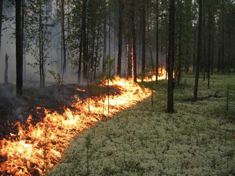 В Омской области первый в сезоне лесной пожар зафиксирован спутником