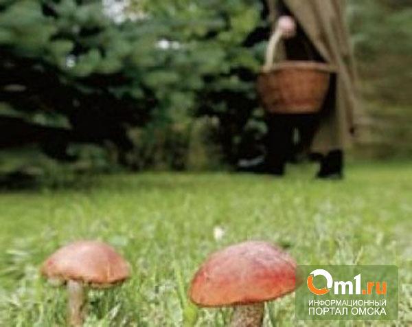 В Омской области в тайге заблудилась пенсионерка