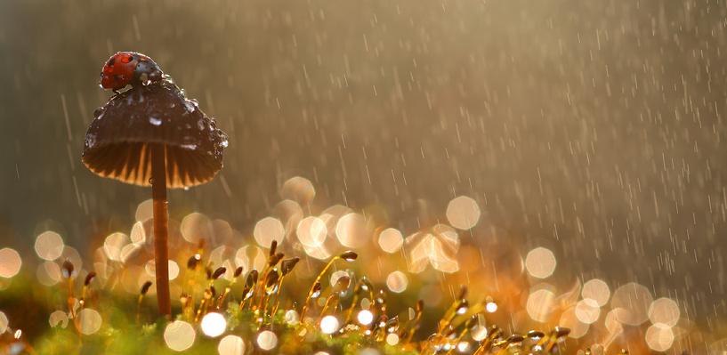 Синоптики пообещали омичам дожди на выходные