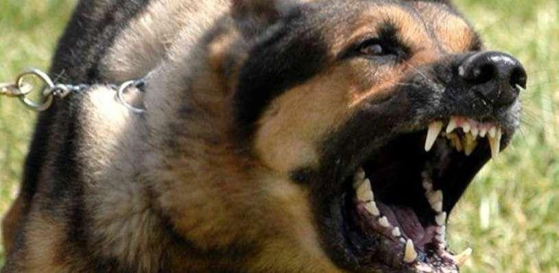 Хозяин овчарки, покусавшей юную омичку, выплатил пострадавшей 40 000 рублей