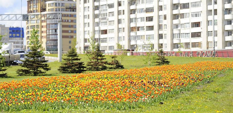 В сквере «Первомайский» и на бульваре Строителей высадили гладиолусы