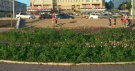 Омичи уверены, что в центре Омска выросла конопля