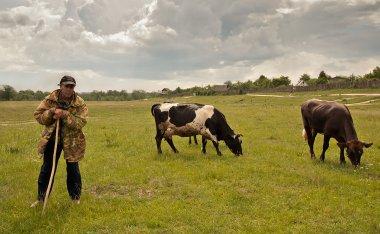 Омского фермера с сыном будут судить за избиение пастуха, распустившего скот