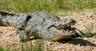 В Омске отметят день рождения крокодилов