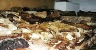 На трассе Омск-Павлодар задержали 25 тонн шкур коров