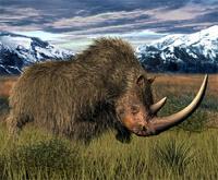 Ученые нашли на Урале останки древнего носорога