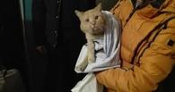 В Омске около 12 часов спасали рыжего кота, который упал в шахту с трубами