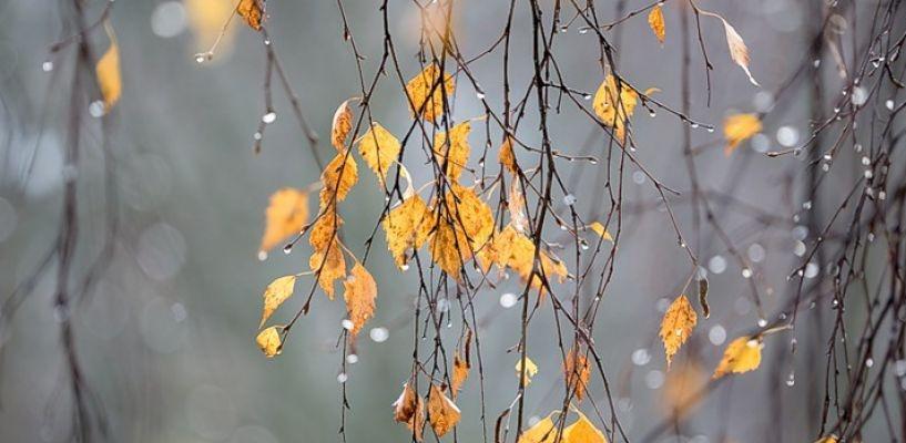 Омск ожидает неустойчивая погода