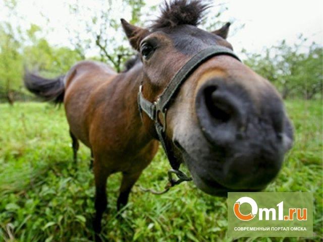 Прокуратура ищет виновных в смерти лошадей в Омской области