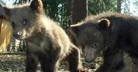 Омичей просят придумать имена для медвежат Большереченского зоопарка