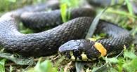 В Омске полицейские поймали змею на детской площадке
