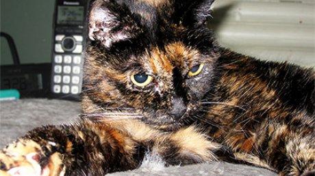 В Америке умерла самая старая кошка в мире