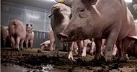 «РУСКОМ-Агро», известный своими «Сибколбасами», поймали на сливе навоза