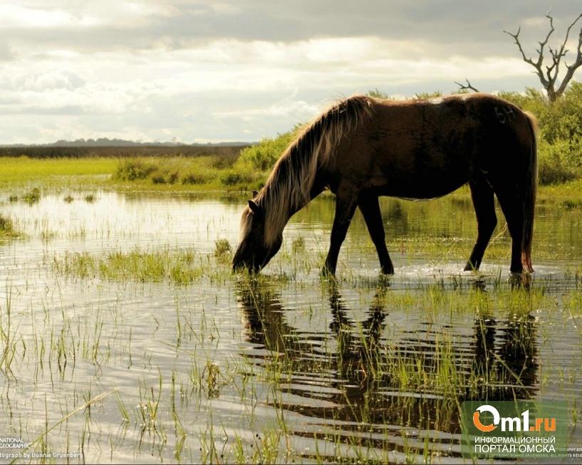 В Омской области конь на водопое утопил пастуха