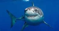 Омичи смогут провести выходные с акулами или Моцартом