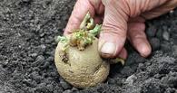 Омич убил супругу из-за посадки картошки