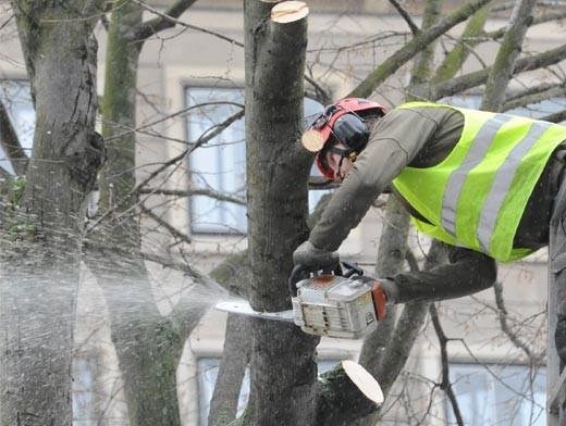 В Омске вырубят еще 175 деревьев
