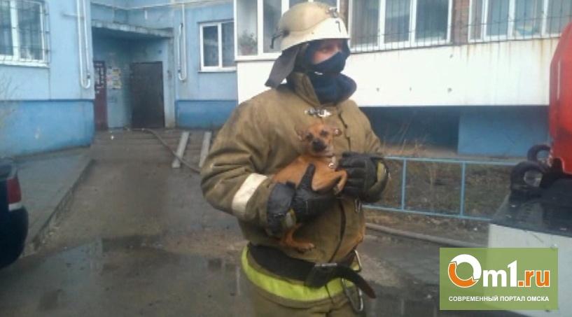 В Омске в Нефтяниках на 10-м этаже горел балкон: пострадал 9-летний мальчик(ВИДЕО)