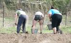 Омским дачникам рассказали, как спасти рассаду от заморозков