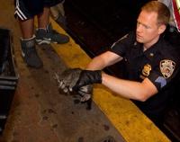 Два котенка парализовали работу нью-йоркского метро