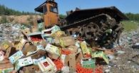 Если товар можно просто съесть, зачем его уничтожать? Россияне подписывают петицию об отмене утилизации санкционного продовольствия