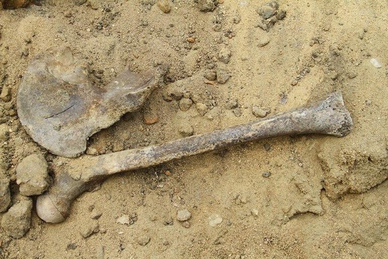 Житель Омска откопал в огороде своего дома скелет