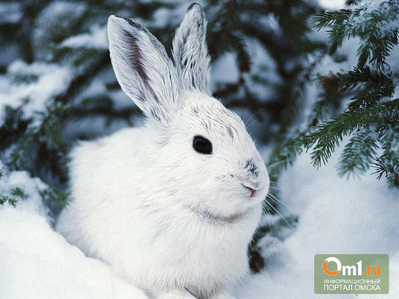 В Омской области создали заказник для животных