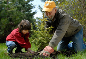 Семья из Омской области высадила лес из 12 000 деревьев