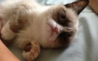 В Англии пройдет фестиваль интернет-роликов про котов