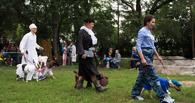 Омские дворняги помогли собрать деньги для больного ребенка