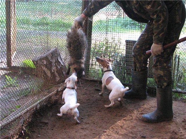 """Омичи требуют закрыть """"притравочные станции"""" для диких животных"""
