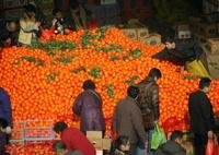 К Новому году в Россию ввезут рекордное количество мандаринов