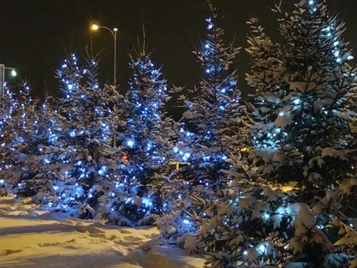 В омских Нефтяниках установят 25 новогодних елок