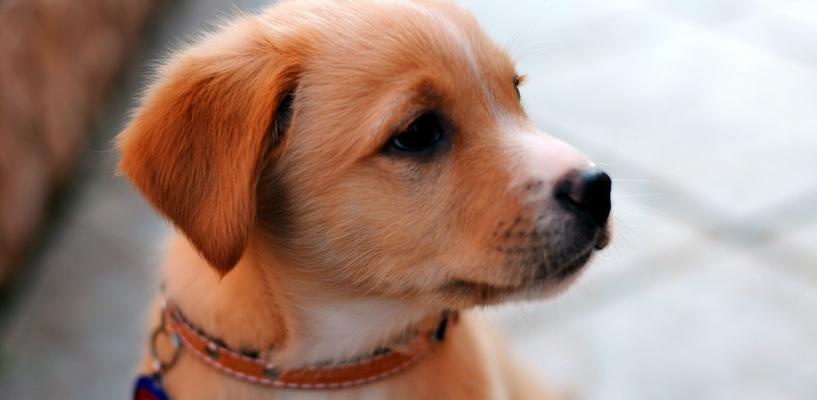 За письмо Деду Морозу маленькая омичка получила долгожданного щенка