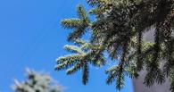 На Любинском проспекте в Омске высадят более 800 деревьев