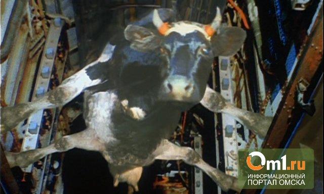 Из поселка Затон эвакуируют даже коров