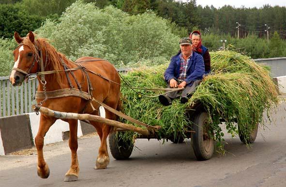 В Омской области на полевой дороге «шестерка» столкнулась с телегой