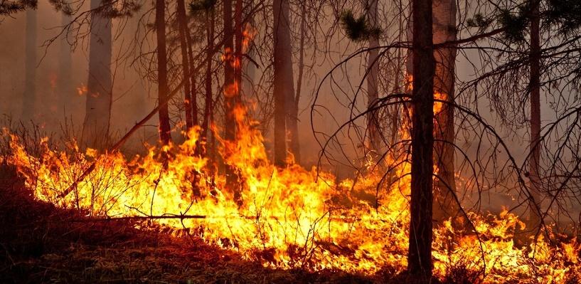 В Омской области, несмотря на паводок, начали гореть леса