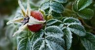 После стабильной жары Омск ожидают летние заморозки