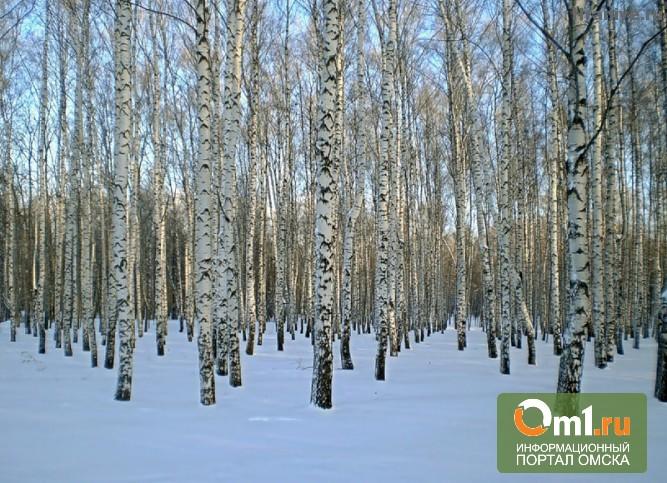 В Омской области сельчанин нарубил берез на 65 тысяч