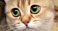 Омичи смогут оформить онлайн-заказ кота на новоселье