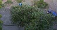 В Омске дерево завалило парковку