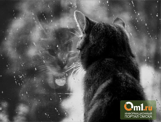 В Омске всю неделю будет держаться холодная погода