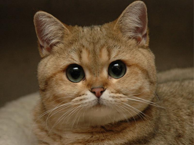 Разводим милашество: сегодня день котиков и мурчания.