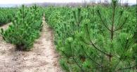 В Омской области задержали КАМАЗ с новогодними соснами