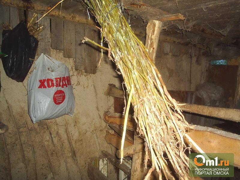 Наркоман из Омской области заготовил на зиму восемь кило маковой соломы