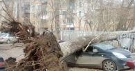 Омичей предупредят об урагане за сутки