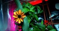 На МКС впервые распустился цветок, выращенный в космосе. Фото
