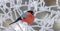 Топ-5 событий недели: волшебство на улицах Омска и имя для снегопада
